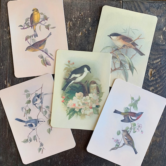 bird flashcards