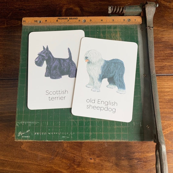 dog flashcards