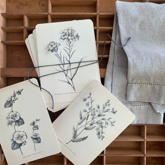 rustic botanical flashcards