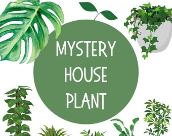 Mystery House Plant - Starter Houseplant - Mystery Plant - House Plants - Rare Plants - Assorted Foliage - Clean Air Plants