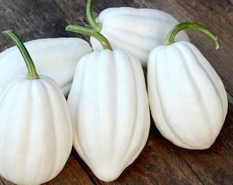 USA Heirloom Organic Squash Seeds - Mashed Potato Acorn - Non GMO - Vegetable Gardening Grow Your Own Food