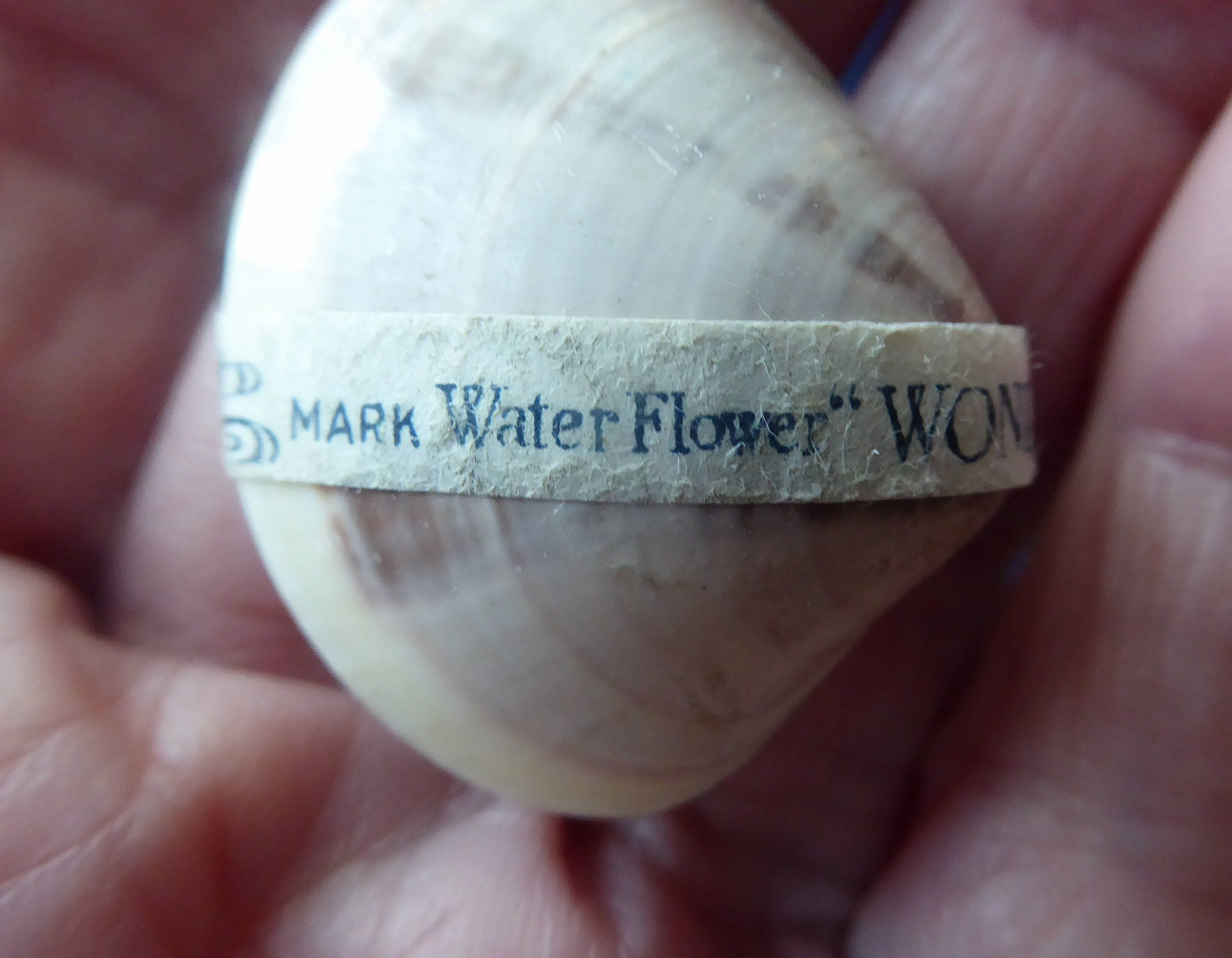 Five 1950s Wonder Shell Japanese Novelty Toy Vintage Rare Water