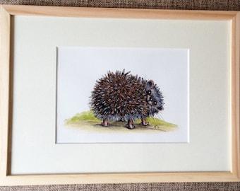 Original illustration Hedgehog