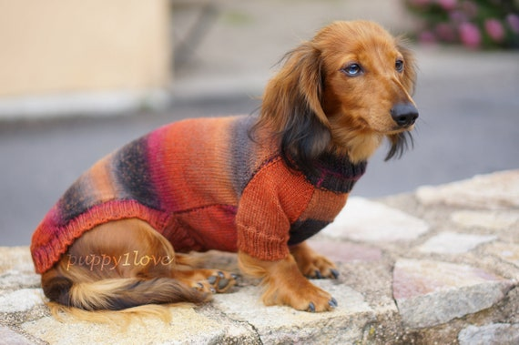 Dachshund Sweater Dog Clothes Doxie Clothes Dog Sweater Dog Etsy