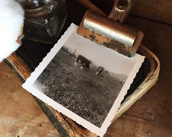 Vintage Cow Photo / Yellowstone Photo / Cow Photo / Cattle Photo / Farmhouse Decor / Vintage Photo / Black and White Photo