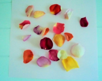 ROSE PETALS, Wedding Confetti, Petal Toss, Bridal Paths, Flower Girl, dried Rose Petals, Wedding Petals, for fairy tale endings, 10 cups