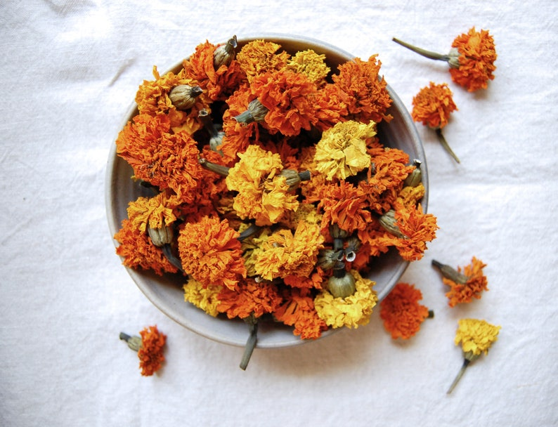 Dried Marigolds Eco Dye Plant Natural Cloth Dyeing image 0