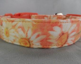 Daisy Flowers on Peach Dog Collar