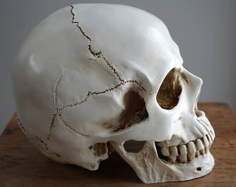 ON VACATION, Human Skull with moving Jaw Bone Replica Skull Real Size Skull Decor Realistic LifeSize High Quality Resin Cast Anatomy 1:1