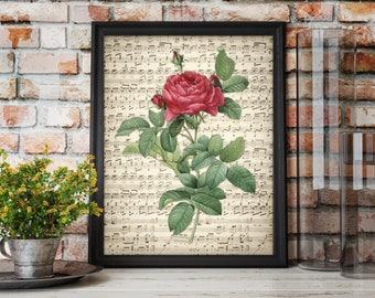 Red Rose Flower Sheet Music Art Print