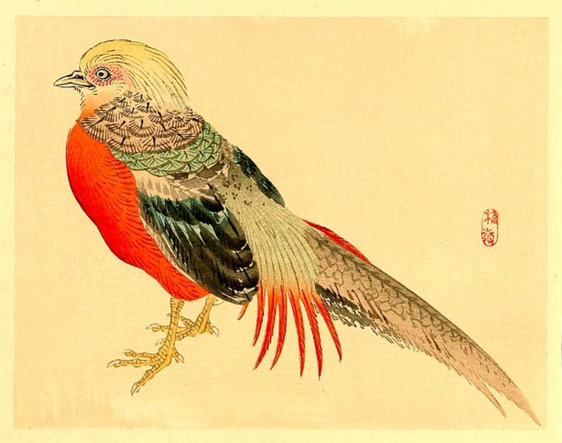 Vögel Kunstdrucke Poster Gemälde Holzschnitt Wiedergaben Etsy