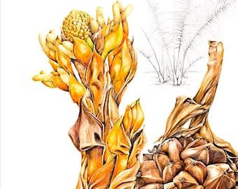 Mangrove Botanical Print, Nypa fruticans, original by Australian artist Julie McEnerny
