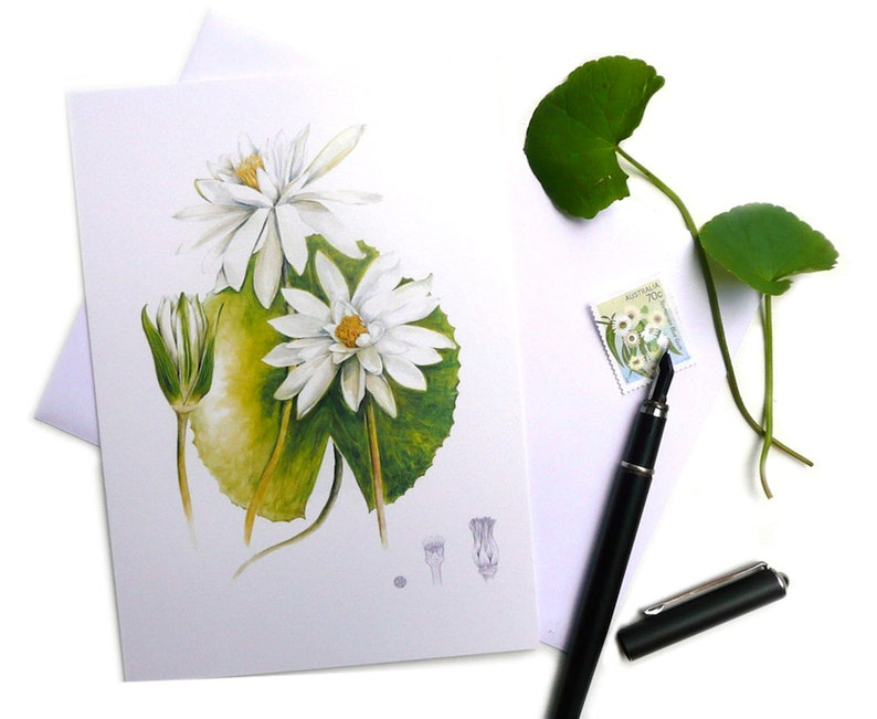 White Water Lily Botanical Card featuring original botanical image 0