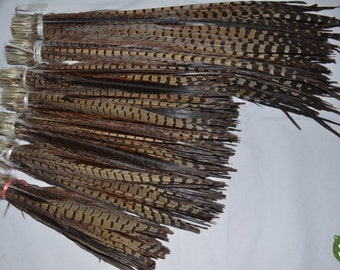 100pcs/lot Perfect Ringneck Pheasant Tail Feathers pheasant feather  for Costumes or Hats