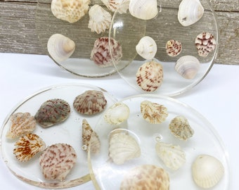 Four piece set of clear epoxy resin coasters with seashells