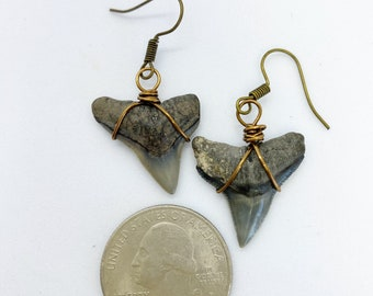 Wire wrapped prehistoric sharks tooth earrings