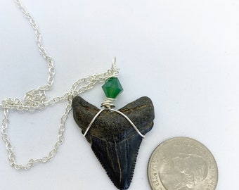 Prehistoric Mako sharks tooth wire wrapped with Swarovski crystal on 18 inch nickel free chain
