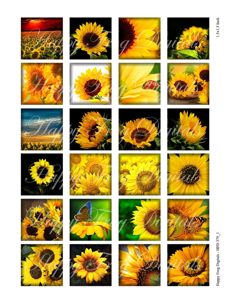 Instant Download 379 HFD Printable Download Sunflower 25x25 mm squares- digital collage sheet 1.5x1.5 1x1