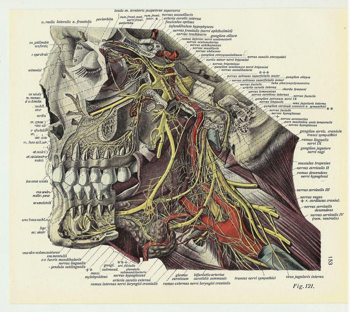 Skull art teeth vintage poster