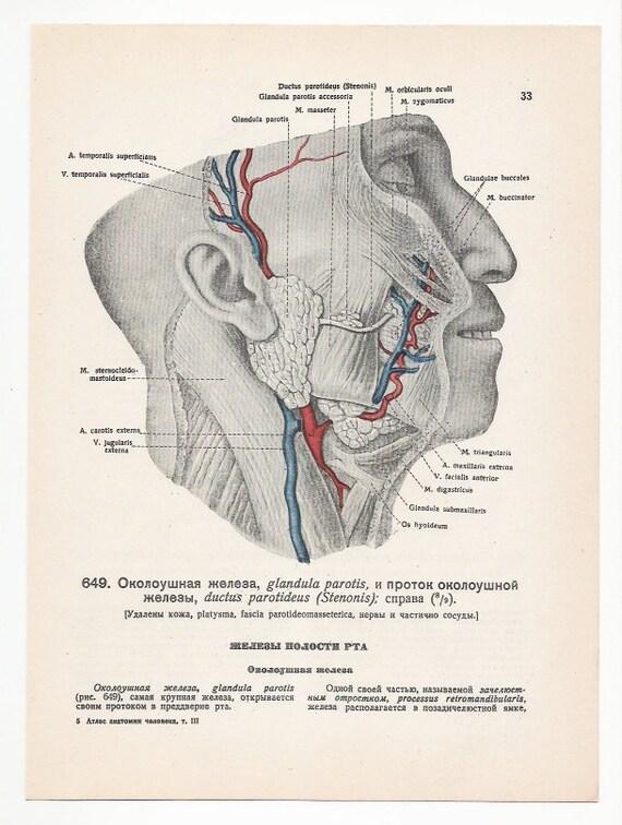 Gift for medical students Anatomical 1947 Prints Vintage | Etsy