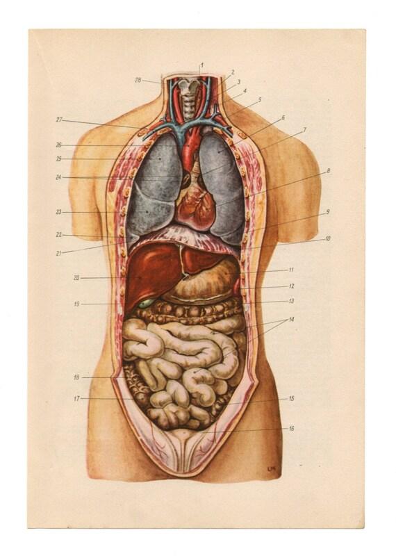 reutilizar de reciclaje impresión upcycle anatomía Organos | Etsy