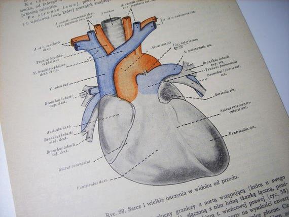 Herz-Diagramm Wand Kunst Anatomie Druck Wissenschaft Plakat | Etsy
