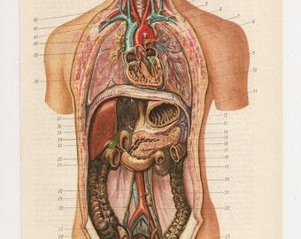Floral anatomy bundle anatomical art prints human body anatomical prints medical diagrams illustration anatomy print old anatomic page human body paper ephemera upcycle recycle ccuart Image collections