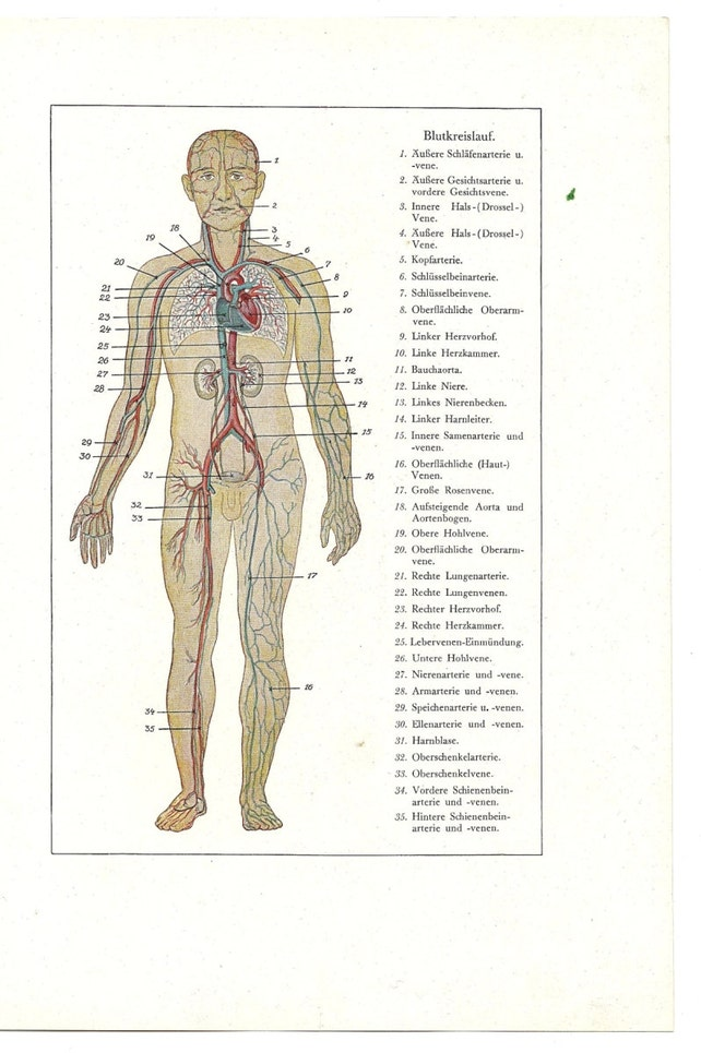 Menschlichen Körper Druck alte Seite anatomische anatomische | Etsy