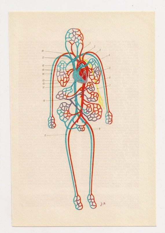 Sangre de arte anatomía Organos ilustraciones diagramas   Etsy
