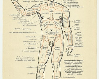 Medical student gift, anatomy poster