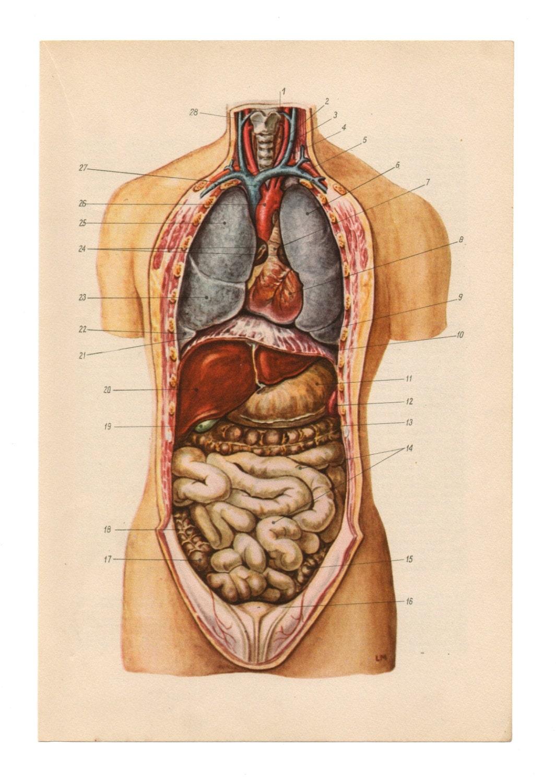 il_fullxfull.577860323_jnql anatomical prints vintage medical diagrams skull skeleton etsy