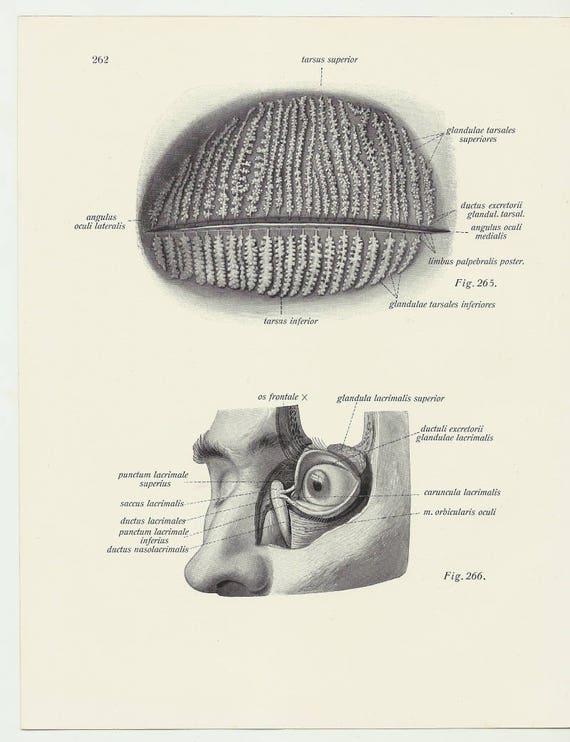 Auge Augapfel medizinische Anatomie Eintagsfliegen Arzt