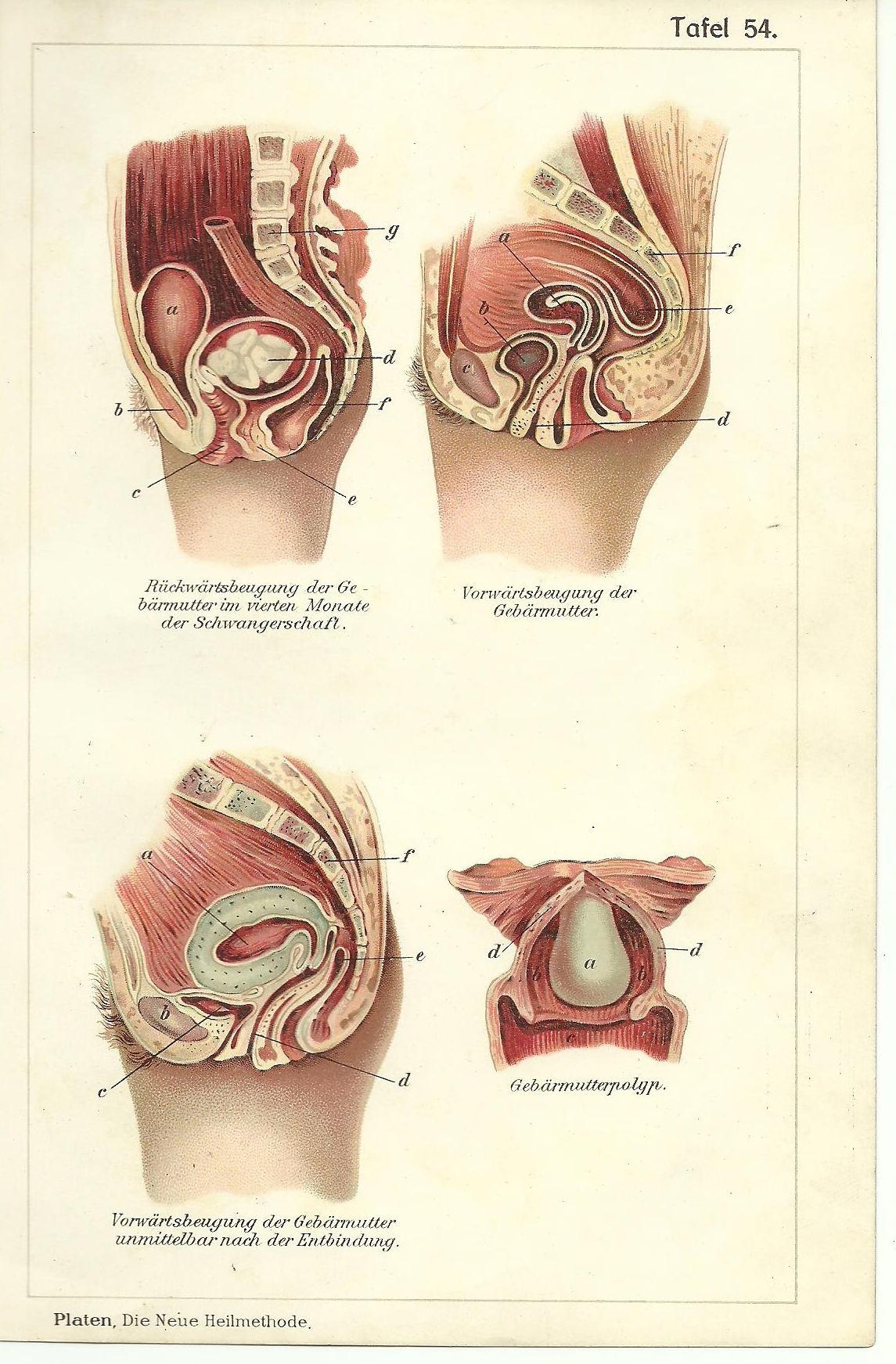 Scheide anatomische Druck Vintage Illustration medizinische