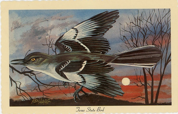 texas state bird mockingbird vintage postcard signed artist etsy