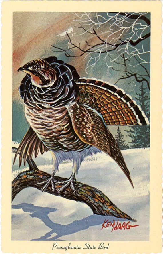 pennsylvania state bird ruffed grouse vintage postcard etsy