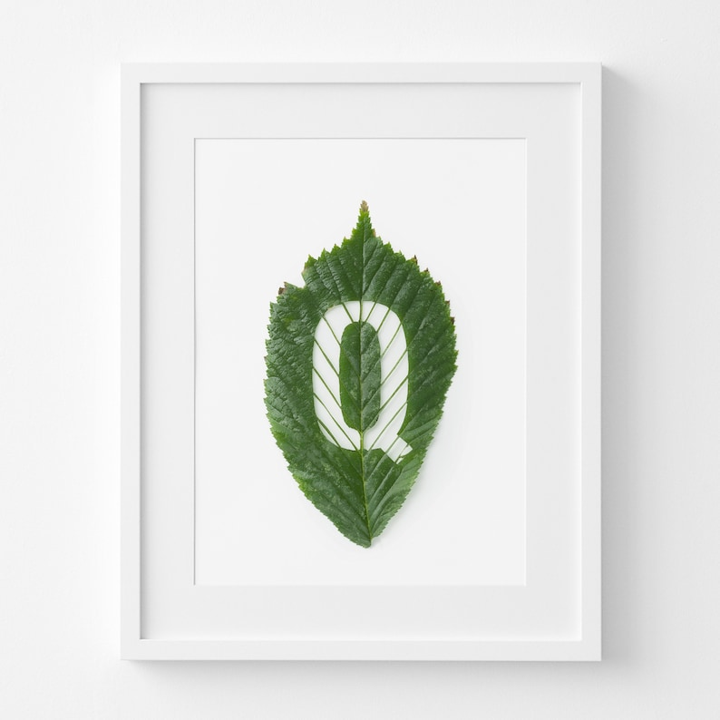 graphic regarding Letter Q Printable identify To start with Letter Q Printable Leaf Artwork Letter Q carved out of a Hornbeam Leaf through hand Reward for Character Associate