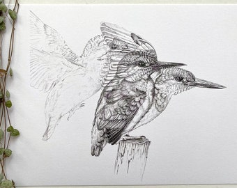 Poster A4 size   Kingfisher