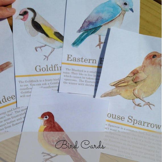 Backyard Birds Bird Cards Nature Study Homeschool