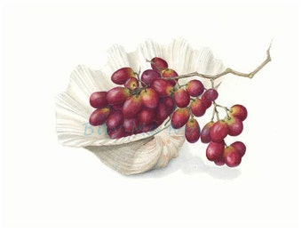 Shell and Grapes watercolor print