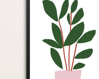 Ficus (Office Plants)