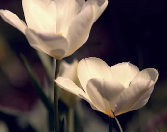 Flowers - 8x10 Photograph