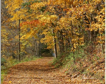 White Gate, Fall Day Eastern Ohio