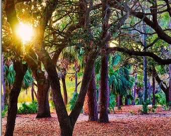 Sun shining through trees at Innisbrook in Palm Harbor, Florida