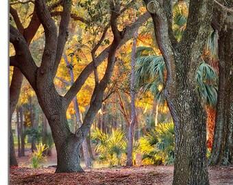Setting sun bathing trees at Innisbrook in Palm Harbor, Florida