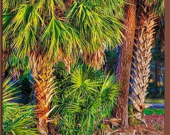 Palm trees glowing in the setting sun at Innisbrook in Palm Harbor, Florida