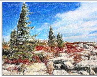 Bear Rocks, Dolly Sods, near Davis, WV