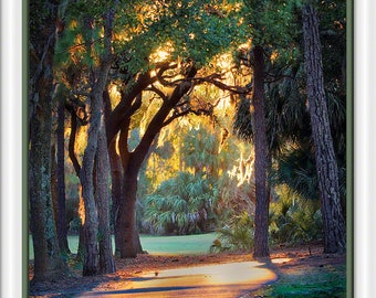 A canopy created by setting sun bathing trees at Innisbrook in Palm Harbor, Florida