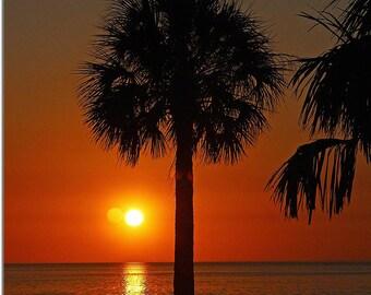 Palm Tree at Sunset Beach, Tarpon Springs Florida