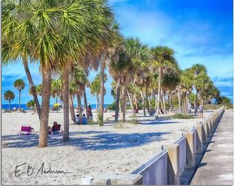 Palm Trees at  Howard Park, Tarpon Springs, Florida