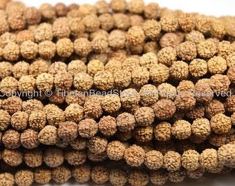 10 BEADS 9mm Natural Rudraksha Seed Beads - 9mm Size Nepalese Tibetan Rudraksha Beads Mala Making Supplies by TibetanBeadStore-  LPB67-10